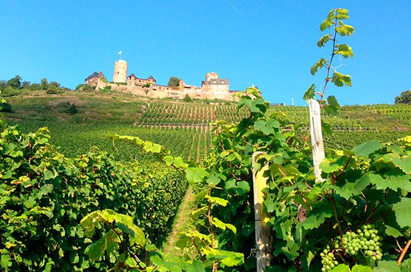 Blick-auf-Burg-Thurant.jpg
